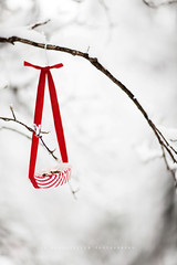 Cake for birds (| Les Hirondelles |) Tags: christmas red italy white snow cold bird birds fruit garden paper outside bush holidays europe branch feeding bokeh outdoor stripes wildlife seasonal nuts 85mm hanging ribbon feed shrub leafless celebrate hang celebrating redandwhite whitestripes selectivefocus hazelnuts coldness wintry frozt redandwhitestripes cakeliner 24daystochristmas feedingwildbirds leshirondellesphotography