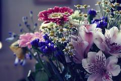 Flowers (estherfemmigje) Tags: sony a100 blossom romantic
