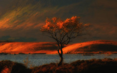 In Memory of The Tree (euan_pics) Tags: lochan na hachlaise tree rannoch moor