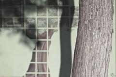 Arbol platonico. (elojeador) Tags: red verde idea sombra rbol mito tronco pintura corteza rejilla verdor apariencia idealismo elojeador elmitodelacaverna hacindoseelenamorado