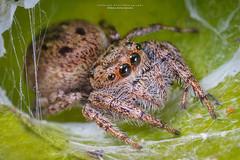 Spider (Jefferson Allan - Photographer) Tags: jeffersonallan paisagens macro macrofotografia closeup arvores campinas superfoto fotografia