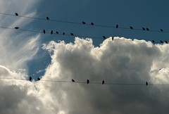 Birds on a Wire (Karen_Chappell) Tags: sky blue white birds wires wire clouds weather nfld newfoundland avalonpeninsula canada starlings