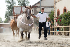 Concours dpartemental du cheval de trait breton  Lamballe Ctes d'Armor (Dicksy93) Tags: img3179 prsentation concours dpartemental du cheval de trait breton jument poulain horse capall caballo cavallo pferd paard animal tier mammifre elevage agriculture equid equitation personne trot licou licol extrieur outdoor haras lamballe ctes darmor 22 breizh bzh bretagne brittany france europe dicksy93 canon eos 650d
