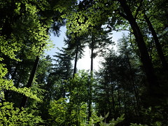 (rutger spoelstra) Tags: forest freiburg germany blackforest stadtwaldschauinsland schwarzwald
