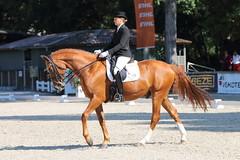 IMG_7062 (dreiwn) Tags: dressage dressur dressuur pferd reitturnier turnierreiten pferdesport horse horseback horseriding equestrian reitverein dressurprüfung kandare doublebridle reiten pferde reitplatz ridingarena