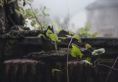 Bow - Nature dominante (J@y C) Tags: nature leaf feuille domination urbex exploration decay abandoned derelict jyc canon 6d canon6d