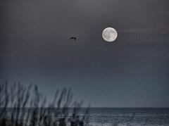 moonrise over the Atlantic ... ; (c)rebfoto (rebfoto) Tags: moon moonrise moonriseovertheatlantic rebfoto sea moonandsea bw blackandwhite