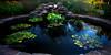 Pond 2 (Sohail-Siddique) Tags: flowers waterlily lotus green leaves water fish rocks trees bush plants white grass sohail riverwood mississauga nikon d7100 canada outdoor nature landscape reflection art park redfish outing advanture