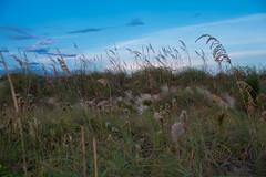 _JAM7764 (Jamil D750) Tags: miami beach south pointe park water blue skies green grass skyscrapers pier lifeguard house evening field nikon d750