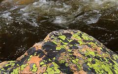 On the Edge (arbyreed) Tags: arbyreed close closeup lichen rock book lichenbook likenlichen gray blue yellow texture water stream uintamountains summitcountyutah
