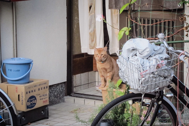 Today's Cat@2012-11-07