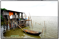 Mangrove forest Chonburi tour by naturenote_E12461014-014