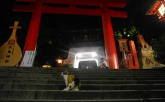 On the steps of Enoshima (runslikethewind83) Tags: life light summer man animal japan night stairs cat temple person japanese gate pentax steps august  enoshima  nihon 2012