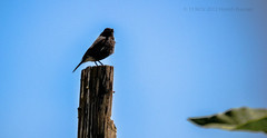 Bird!! (HareshKannan) Tags: wood bird nikon small ooty 55200mm d3100