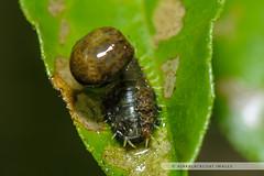 20121117-007 (ajakblackgoat) Tags: macro insect nikonmicro105mmf28 nikond700