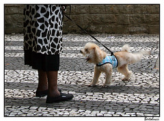 Woman and dual headed Paulista dog (AurelioZen) Tags: dog southamerica brasil sopaulo sixwordstory motionblur oldwoman avenidapaulista walkingthedog paulistapavement