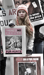 Fur Free Friday - FFF 2012 - Black Friday - Chicago (Jovan 2J) Tags: portrait chicago canon blackfriday demo photo vegan protest sigma demonstration activism journalism activist 2012 fff furfreefriday 70mm 17mm 60d flickrandroidapp:filter=none