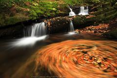AUTUMN DANCE (R a q u e l d e C a s t r o   Images) Tags: autumn leaves rio river hojas otoo streams cantabria cascadas sigma1020f456 canoneos50d vegadelpas raqueldecastro