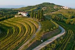 Travel to Friuli Venezia Giulia (Creativelena) Tags: travel sea mountains cuisine experience bloggers venezia authentic giulia friuli dallalto aeree vigneti