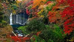 Colorfalls the other side (182 mier) Tags: waterfall waterfalls colorfultree autmun shiraitofalls riverflow shiraitowaterfalls japanautumn blinkagain shiraitofujinomiya