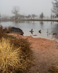 Boat Lake Mist (Cheryl Atkins) Tags: trees mist water fog reflections pond ducks pattersonpark boatlake naturethroughthelens