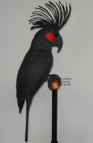 Probosciger aterrimus  (2)