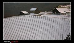 12-12_Gamlitz_0516 (werner_austria) Tags: winter snow vineyards sdsteiermark styriaaustria mygearandme mygearandmepremium mygearandmebronze rememberthatmomentlevel1