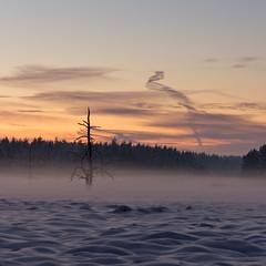 (Todt Geyer) Tags: schnee sunset snow tree fog sunrise canon sonnenuntergang nebel minimal 1750 tamron sonnenaufgang baum fichtelgebirge 60d