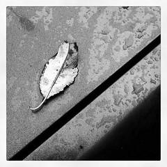 RainBath (Ivn R. Cabrera) Tags: blackandwhite abstract hoja blancoynegro wet square leaf dry monochromatic inkwell abstracto seco humedo cuadrado monocromatico instagram uploaded:by=instagram