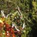 2012_Loop_360_Trees_128