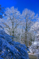 Winter Snowstorm 2016 (Scorpiol13) Tags: trees winter white snow cold nature branches snowstorm newengland bluesky winterwonderland snowcovered