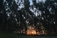 Captive (mara.arantes) Tags: sunset tree light digital nikon d3200 sky forest landscape plant nature naturaleza natureza