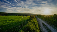Pastoral South Downs (TanzPanorama) Tags: england westsussex southdowns steyning findon walk sky sunset sunshine sunrays sunstar light sonya7ii ilce7m2 sony fe1635mmf4zaoss variotessartfe1635mmf4zaoss evening tanzpanorama flickr path sheep landscape clouds fence pastoral