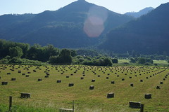 Hay Bales in a Pasture (Roger Inman) Tags: durangosilvertonrailroad train steam narrowgauge narrow gauge colorado durango silverton pasture meadow hay bales