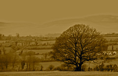 January Tree (murtphillips) Tags: tree january winter cold countryside