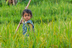 Little girl in a rice field (steph3xx) Tags: bali child girl indonesia little munduk rice ricefields portrait visage fille petite