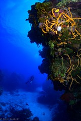 No Name Reef, Cozumel (jcl8888) Tags: nikon d7200 tokina 1017mm nauticam cozumel mexico scuba diving