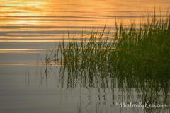 Sea Grass (KAM918) Tags: sea grass seagrass water reflections sun sunrise green massachusetts ma newburyport nikon d610 summer