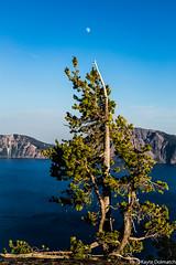 (kayters) Tags: blue oregon kaytedolmatchphotography kathleendolmatch roadtrip travel pnw nature landscape craterlake moon alignment tree explore canon