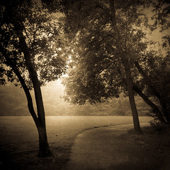 An Early Morning Walk (William Flowers) Tags: earlymorning path fog trees light