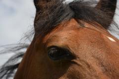 DSC_1811 (Maexeltaexel) Tags: pferd auge stern