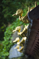 Quack (bigbluewolf) Tags: nikon d7000 biddulph grange nationaltrust national trust nt garden gardens sigma 18250 18250mm