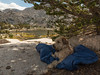 A Dogs Life (pegeshea) Tags: backpack johnmuir nickie wilderness wheatenterrier