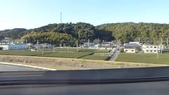 Tea farms (seikinsou) Tags: japan spring osaka tokyo shinkansen train tokaido windowseat view tea plantation hedge forest video