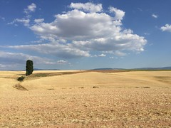summer fields (AntoniodoradoV) Tags: field summer campo verano paisaje countryside landscape