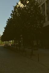 (ACRM PHOTOGRAPHY) Tags: girona spain trees haze shade sunset exposure tourist line urban design proportion perspective street streetscene scene road cobblestone stone dappled