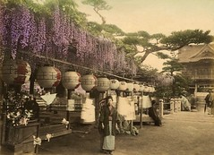 Wisteria Flower on the Market (CardCollector & HobbyPhotographer) Tags: albumenprint japan tokio realphoto vintagephoto 1893 wisteria