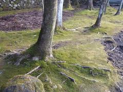 Rooted in moss (seikinsou) Tags: japan nikko spring kanmangafuchi abyss gorge jizo statue red hat bib path walk daiyagawa river tree root moss