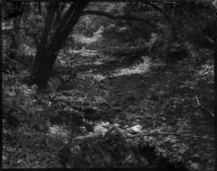 Almost-dry creek bed in late August (dwilliamjohnson) Tags: blackandwhite bw film fujinon fortepan pyro pmk calumet california nature white water largeformat format large landscape 4x5