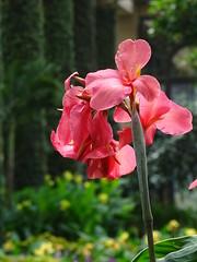 Pennsylvania '16 (faun070) Tags: longwoodgardens canna flower pennsylvania us